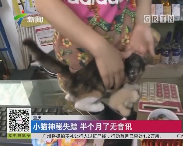 重庆:小猫神秘失踪 半个月了无音讯