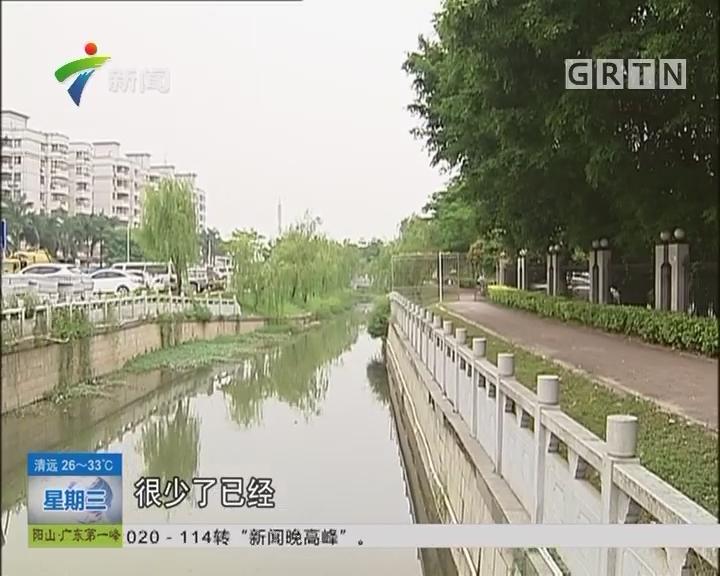 广州河涌整治 街坊:珠江涌水质能养鱼了