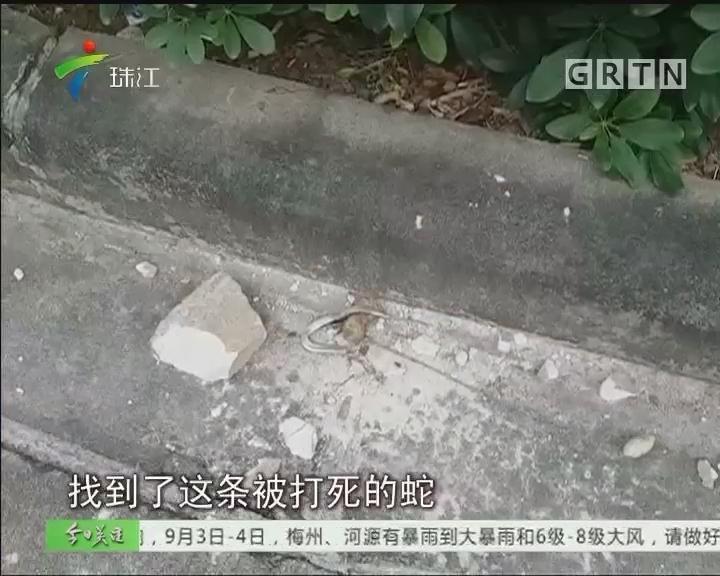 """广州同德围频见""""蛇出没"""" 住户心惊惊"""