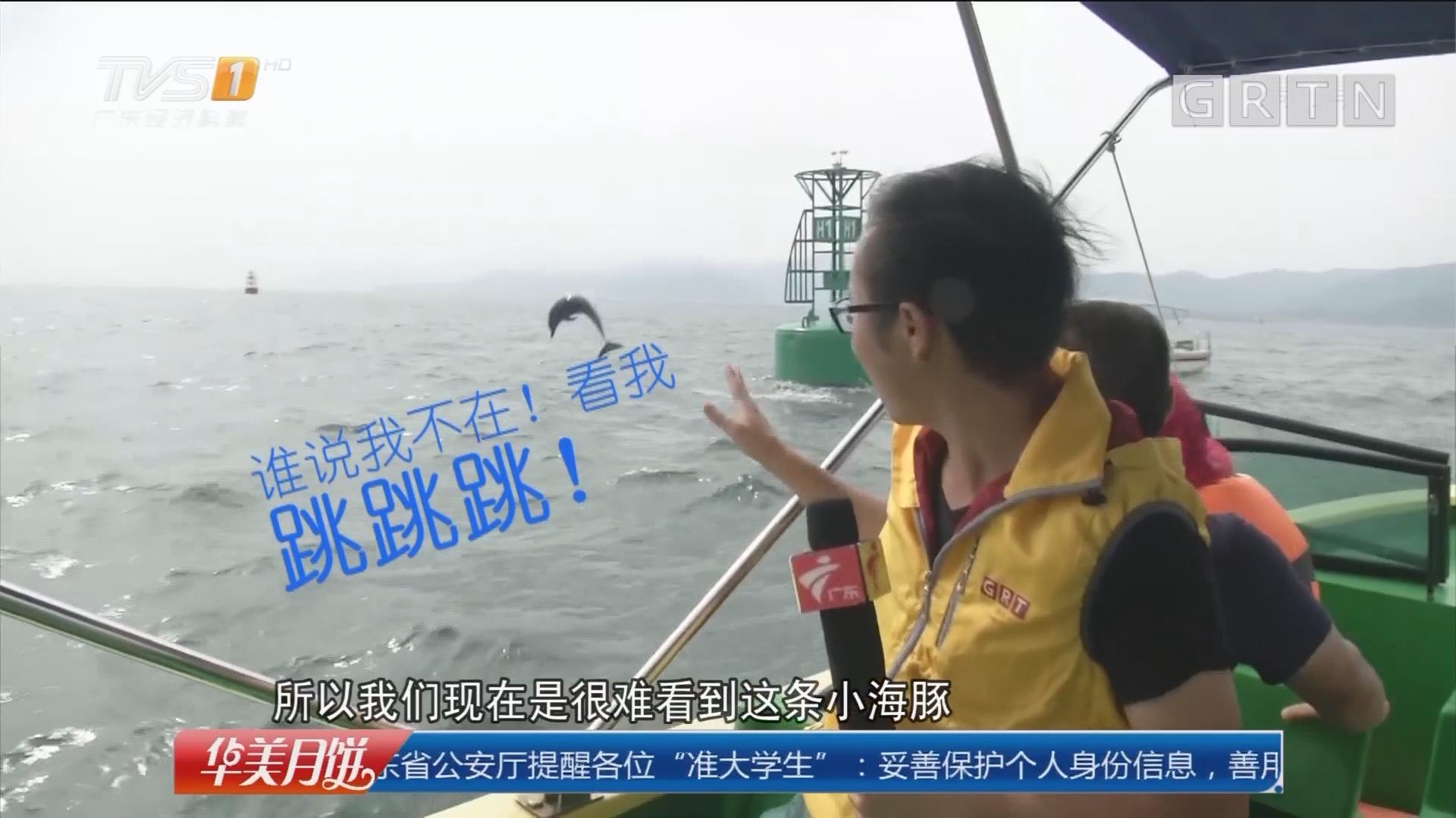 深圳大鹏新区:记者出海探访迷途小海豚 惊喜相逢