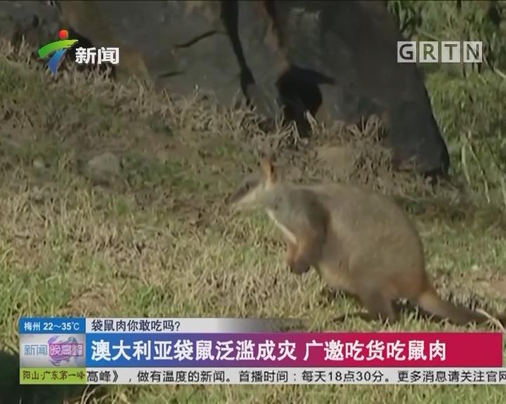 袋鼠肉你敢吃吗?澳大利亚袋鼠泛滥成灾 广邀吃货吃鼠肉