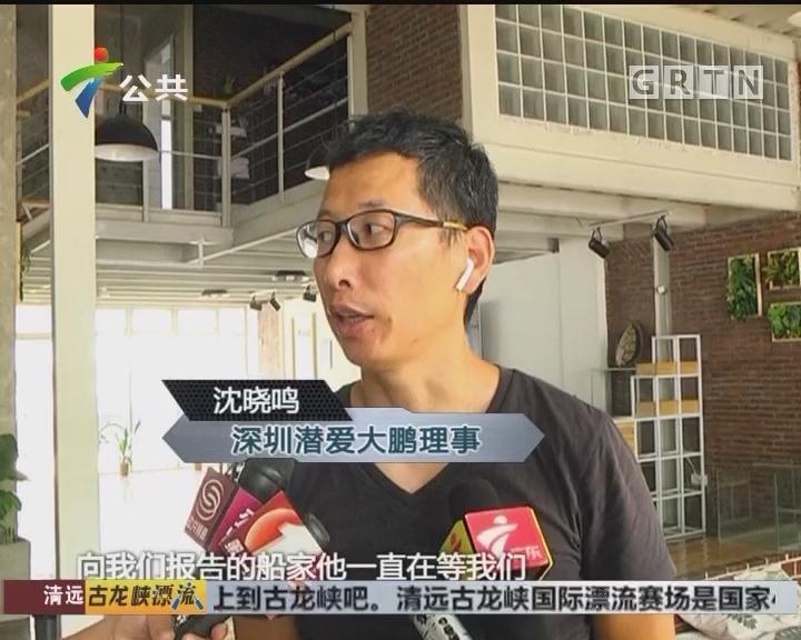 深圳:海豚逗留大鹏半岛 救护小组正密切关注