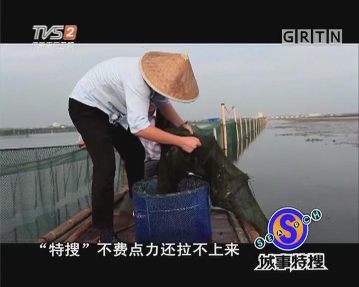 """""""蟹""""逅阳澄湖"""