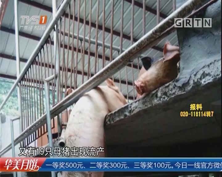 """云浮:勒索不成放炮吓猪""""江湖大佬""""锒铛入狱"""