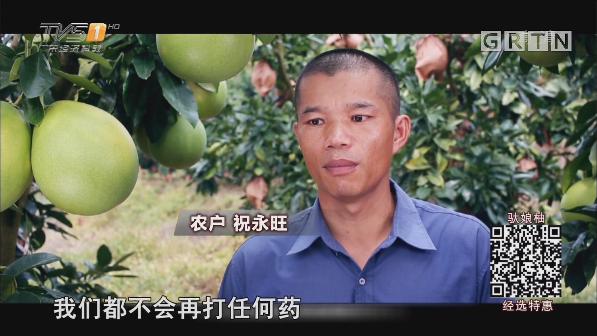 种植匠祝永旺:这个中秋 请带上柚子回家!