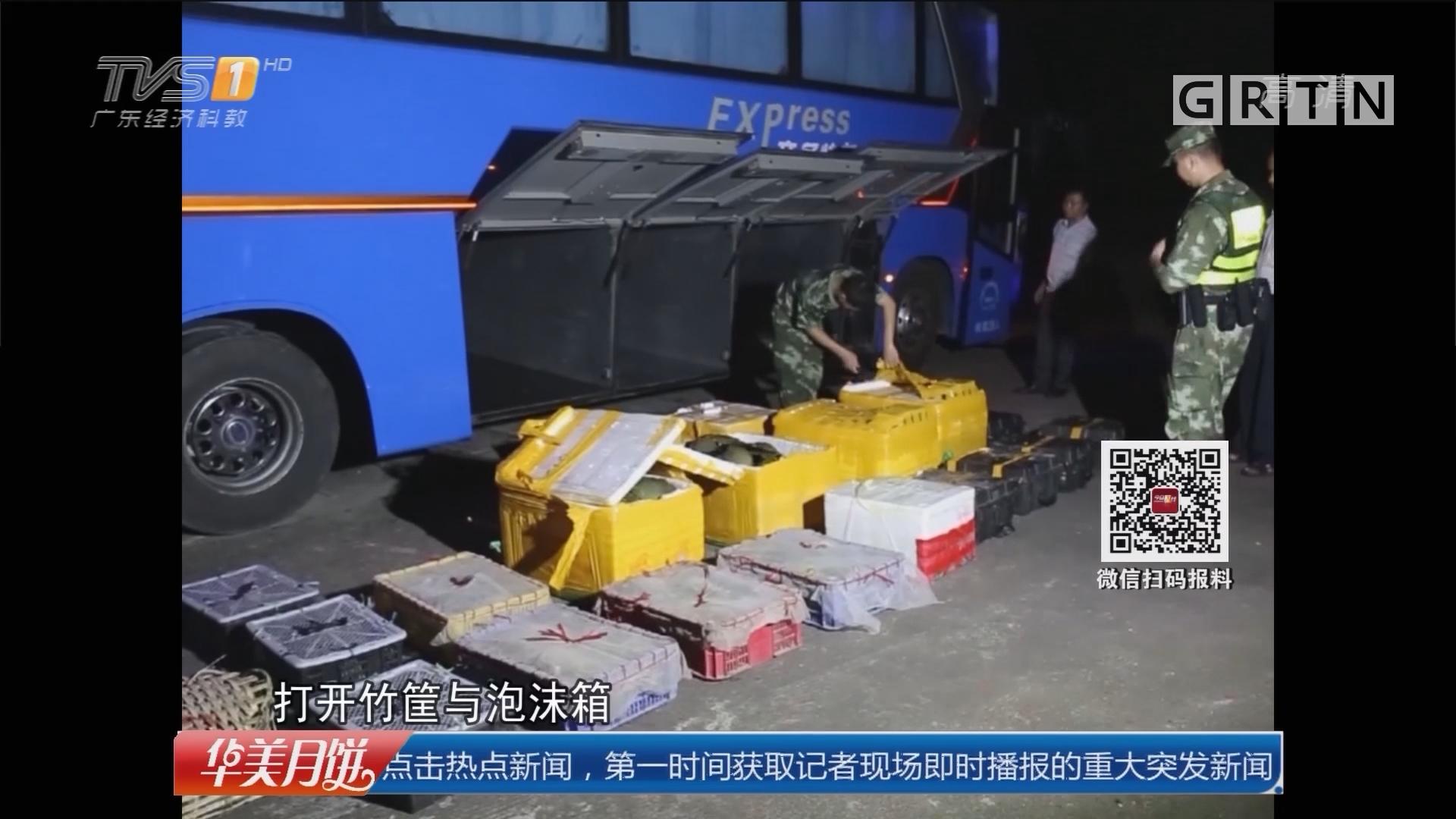 """广西:客车上查获""""海中活化石""""120只"""