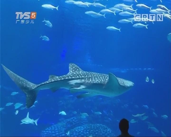 """[2017-09-18]南方小记者:长隆海洋王国""""鲸""""喜不断"""