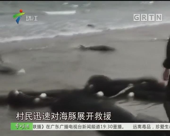 阳江:十多头海豚搁浅 村民合力营救