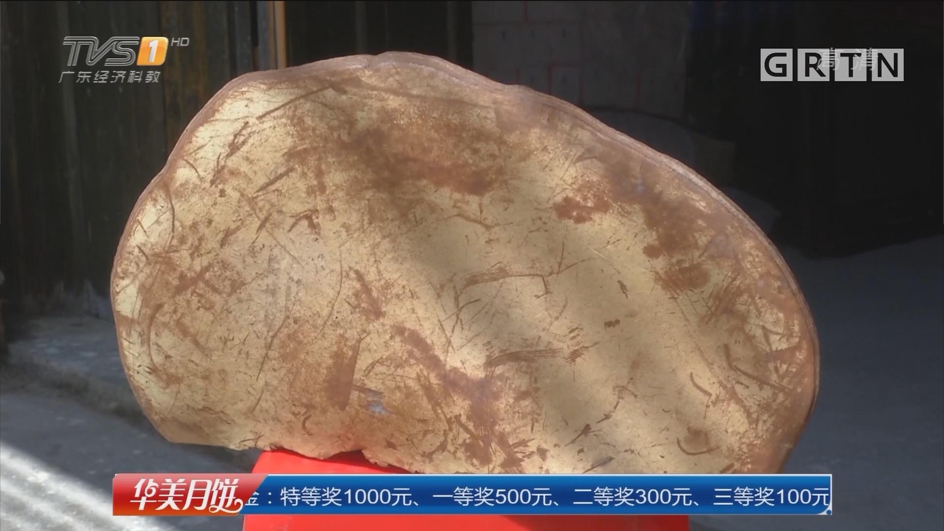 河源连平:村民深山采药 挖到巨型大灵芝