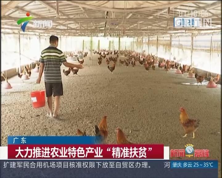 """广东:大力推进农业特色产业""""精准扶贫"""""""