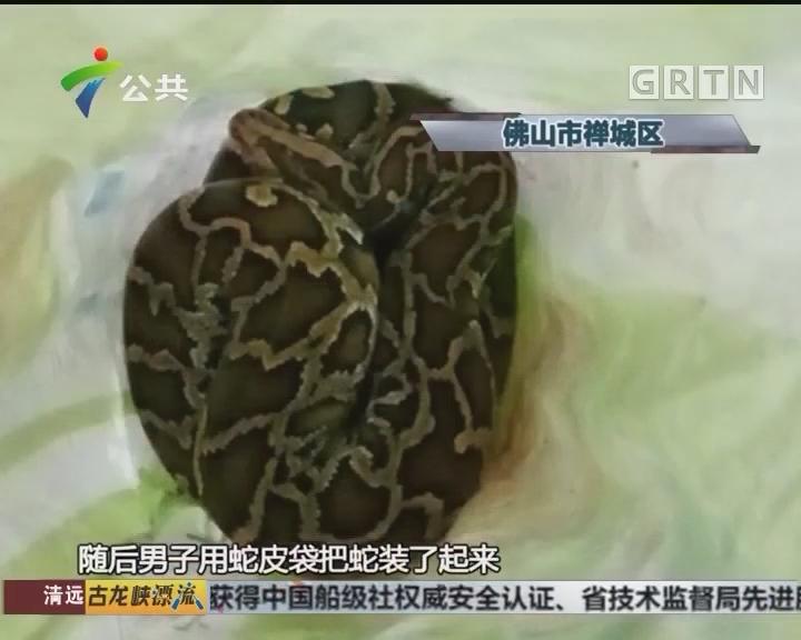 佛山:公园出现大蛇 街坊路过心惊惊