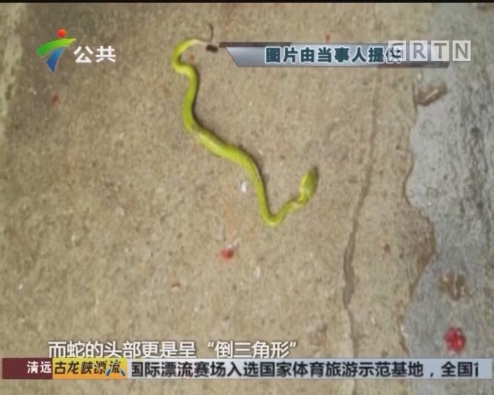 广州:毒蛇藏身单车座垫下 男子被咬伤