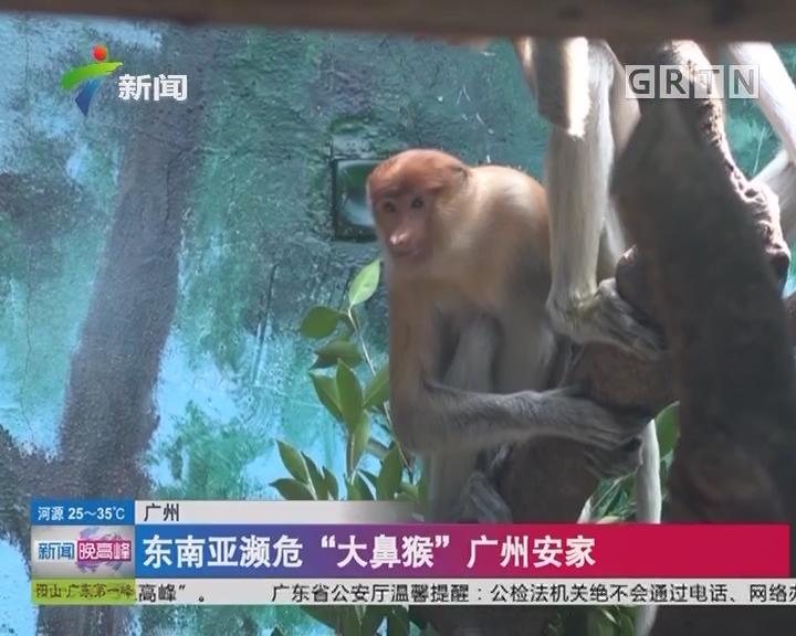 """广州:东南亚濒危""""大鼻猴""""广州安家"""