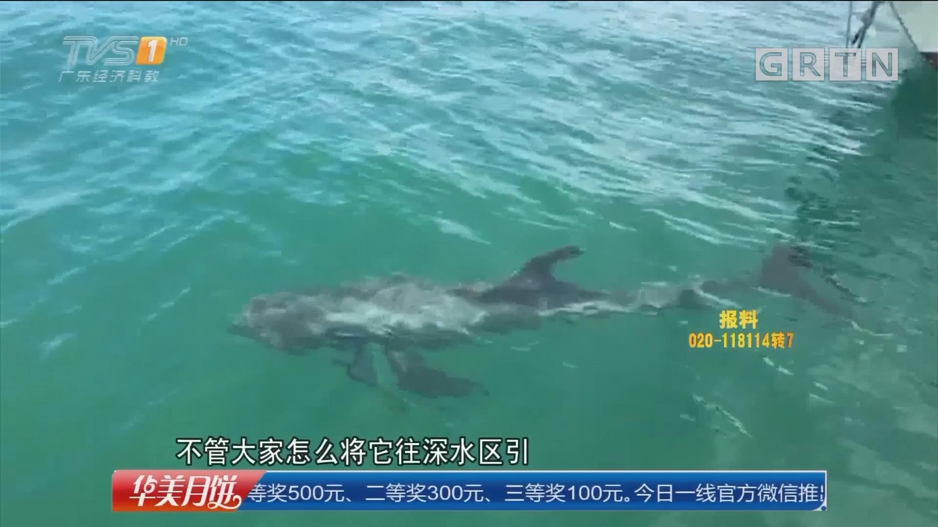 惠州:受伤灰海豚追踪 众人合力抬海豚上岸 送往保护区