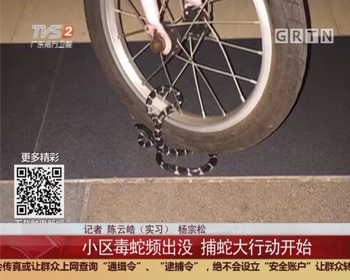 广州荔湾:小区毒蛇频出没 捕蛇大行动开始