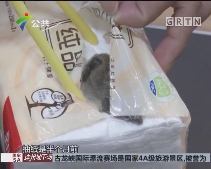 抽纸里惊现死老鼠 被压扁在纸上