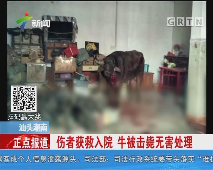 汕头潮南:大水牛闯民宅伤人 特警鸣枪处置