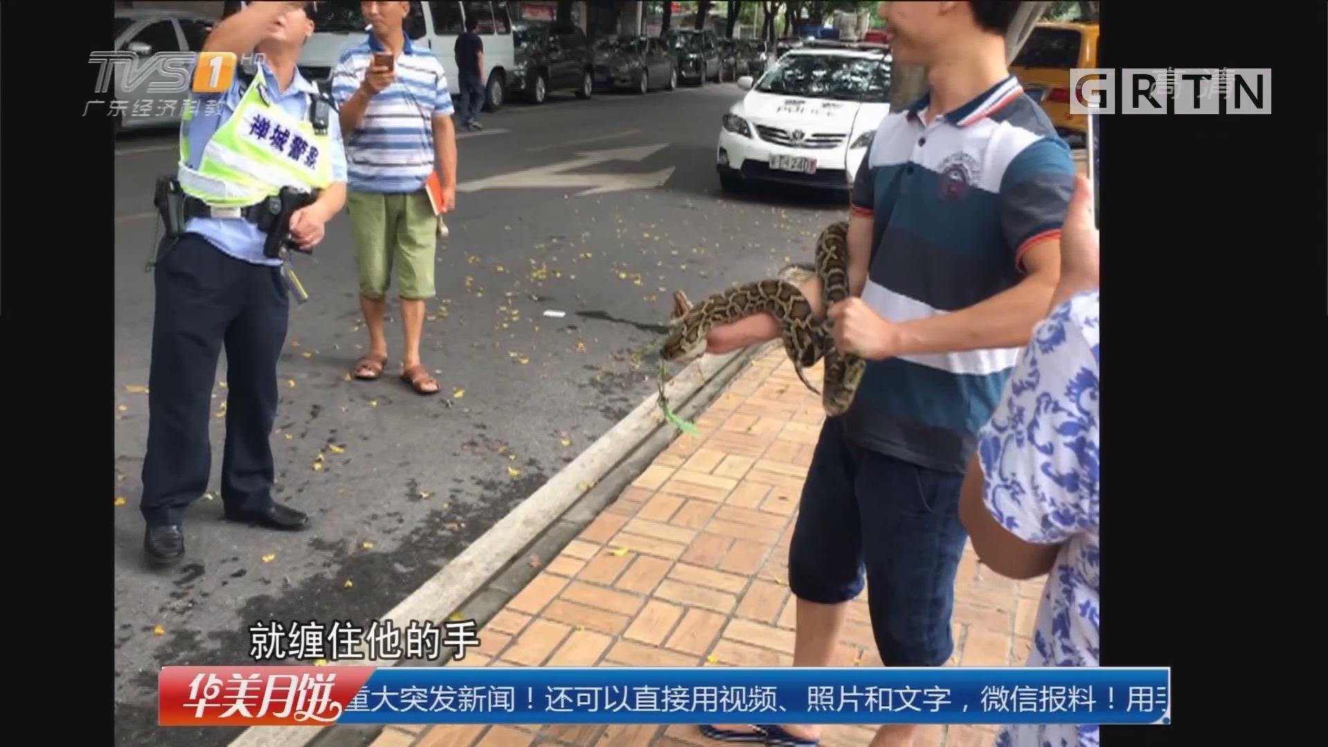佛山禅城:大蛇公园晒太阳 男子徒手擒