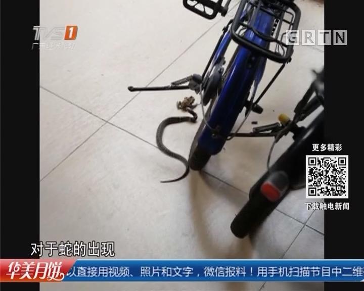 广州荔湾:小区毒蛇频频出没! 捕蛇大行动