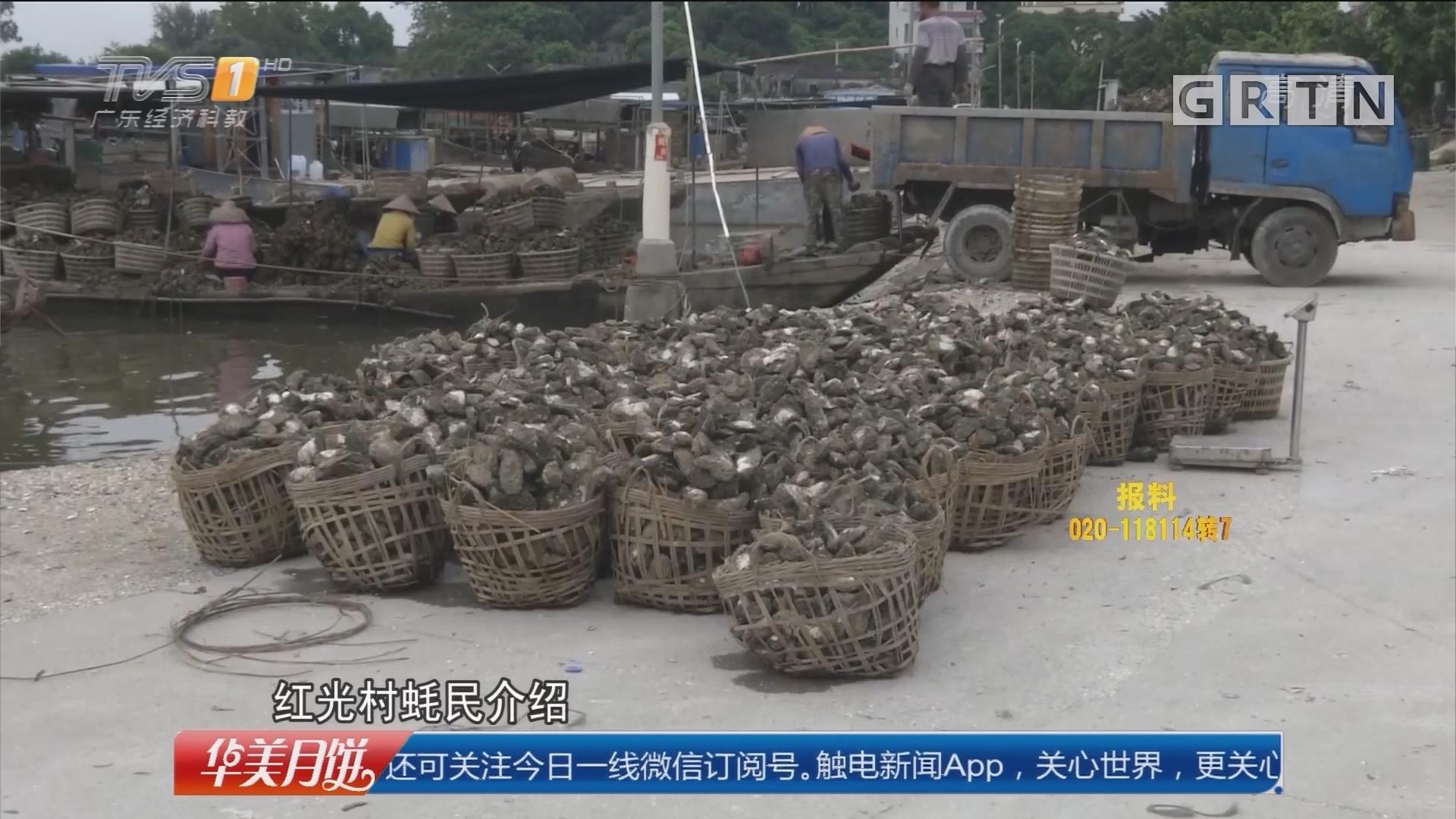 阳江阳西:盗砂损伤红树林 执法部门重拳打击