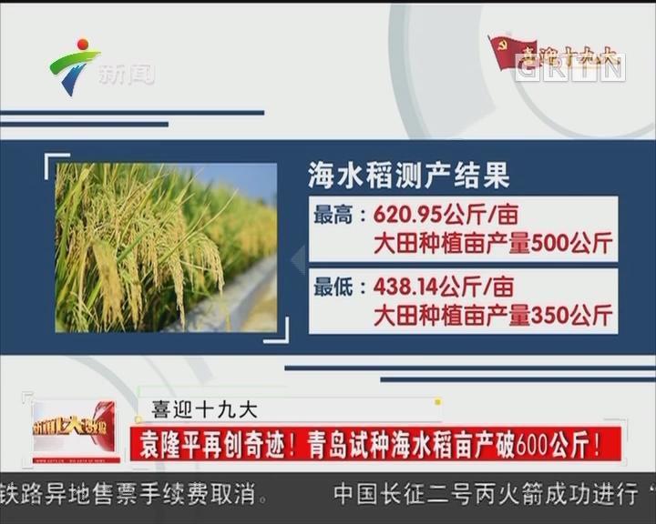 喜迎十九大:袁隆平再创奇迹!青岛试种海水稻亩产破600公斤!