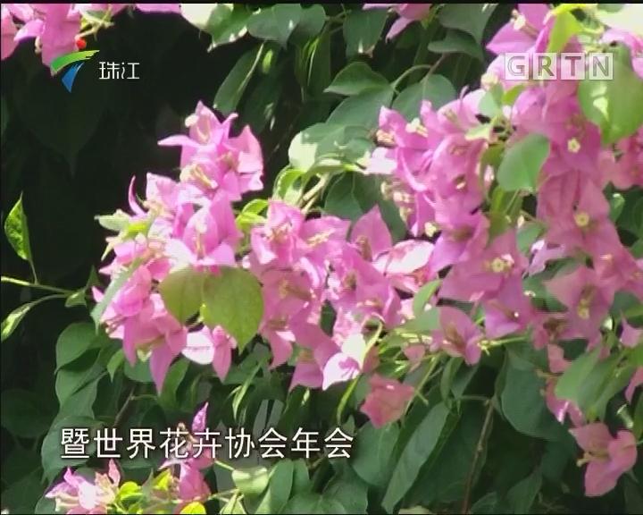 """""""花城""""广州将迎重大""""花事"""""""