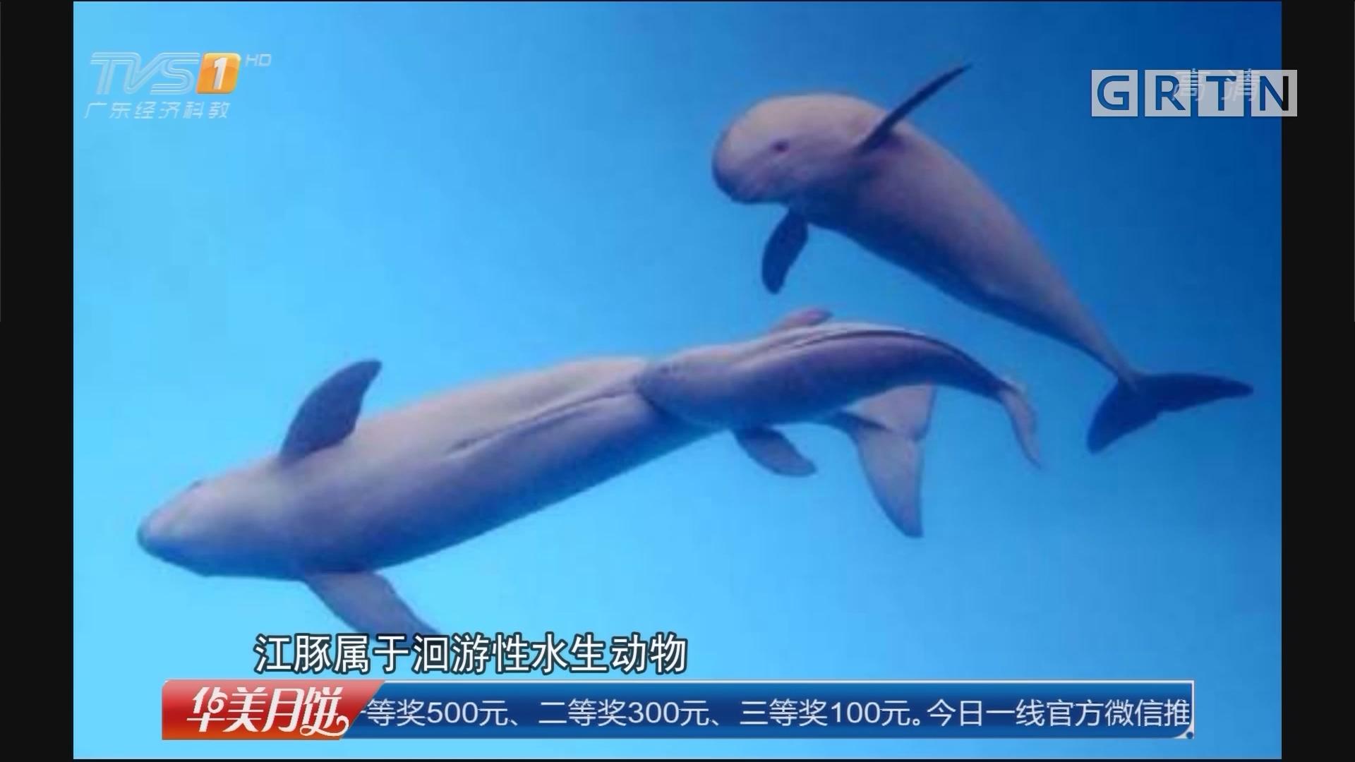 阳江阳西县:两批海豚搁浅海滩 警民合力救援
