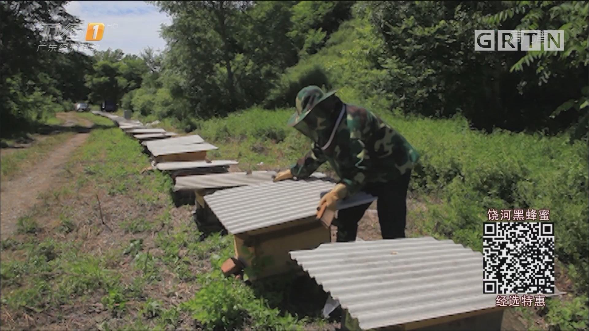 经选商城:扎根深山20年 只为一口好蜂蜜