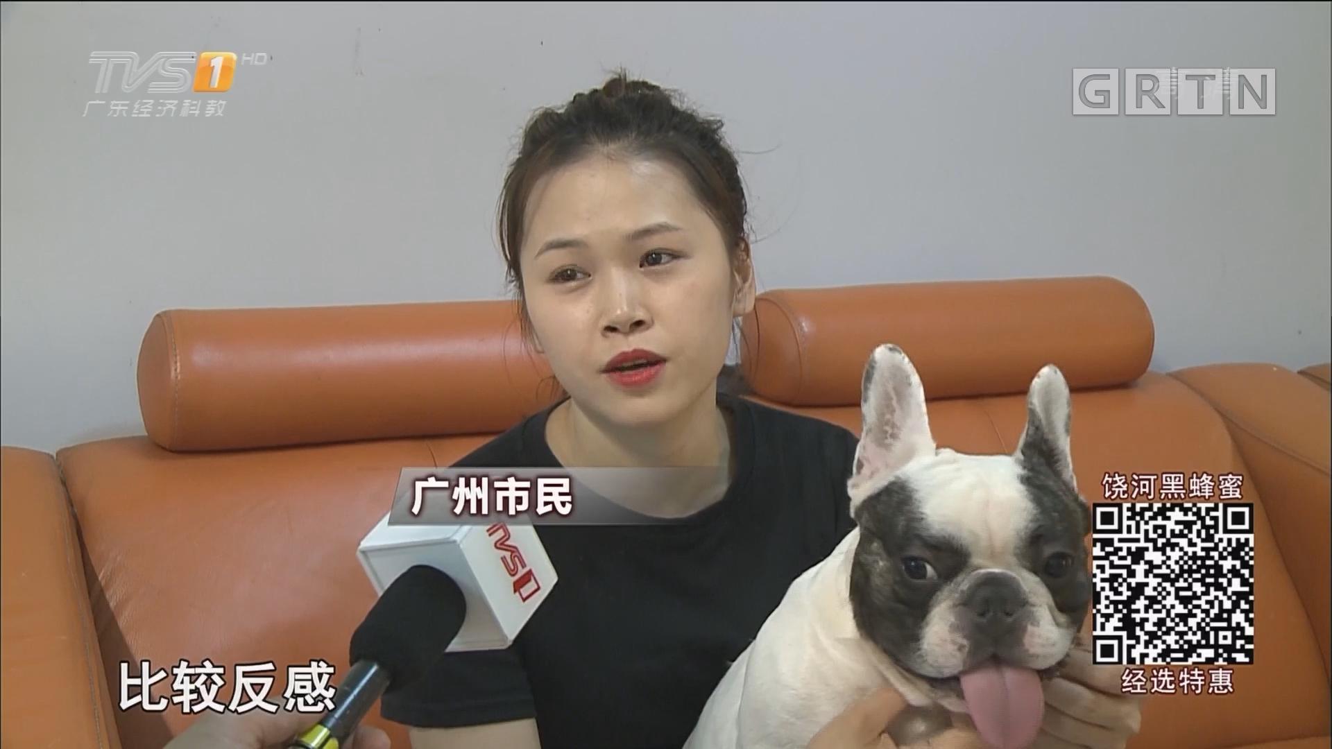 广州养犬乱象调查 不牵绳不上牌占多数