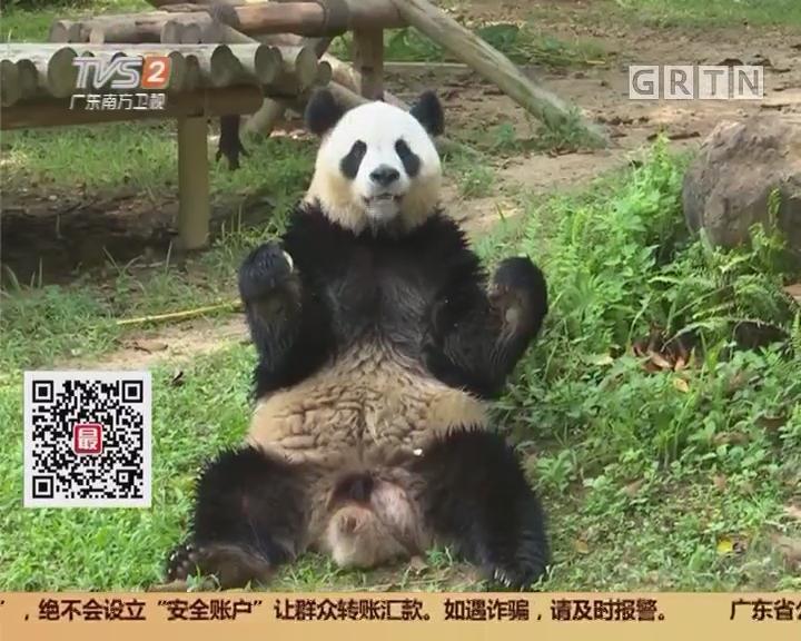 """深圳:""""私人订制""""超大月饼 动物欢度中秋"""
