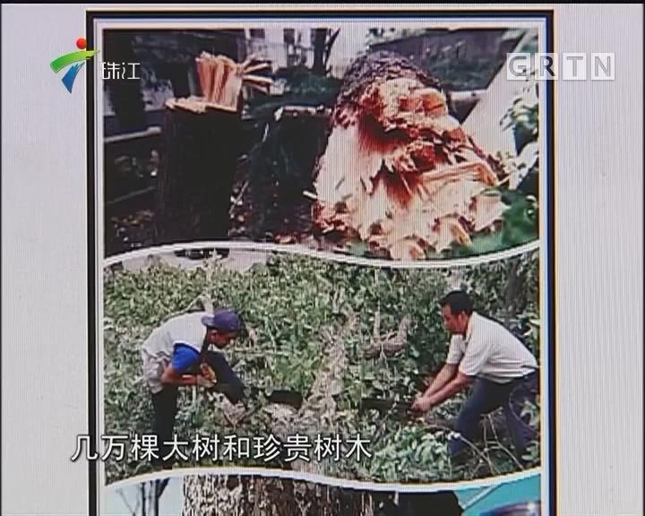 广东发文严禁移植天然大树进城