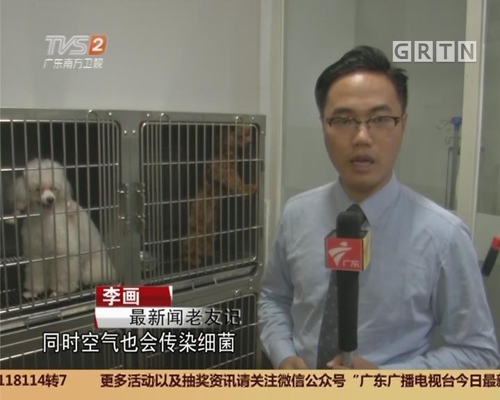 注意狂犬病:被猫抓伤也有机会得狂犬病