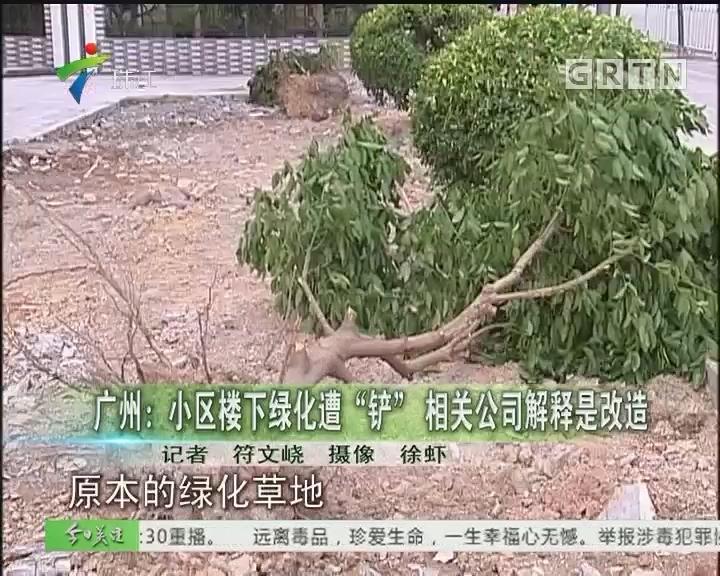 """广州:小区楼下绿化遭""""铲"""" 相关公司解释是改造"""
