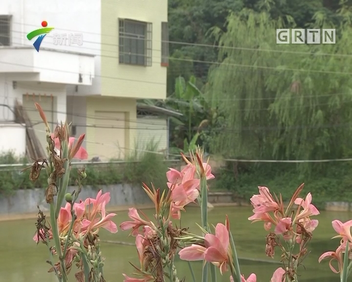 喜迎十九大 广东:不断改善人居环境 提升群众满意度