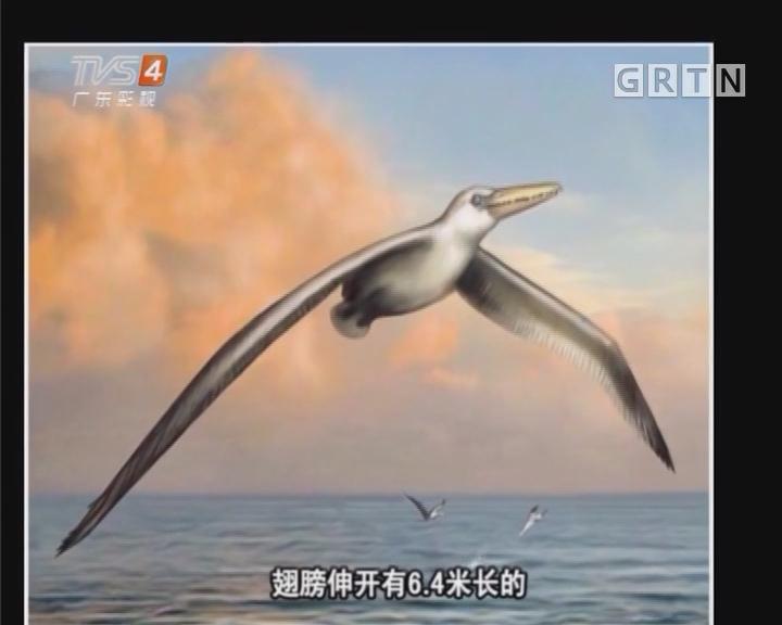 想飞 来双身高3倍的翅膀吧