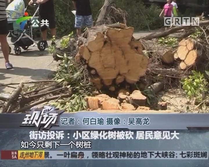 街坊投诉:小区绿化树被砍 居民意见大