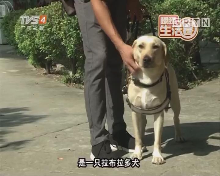 导盲犬养成记