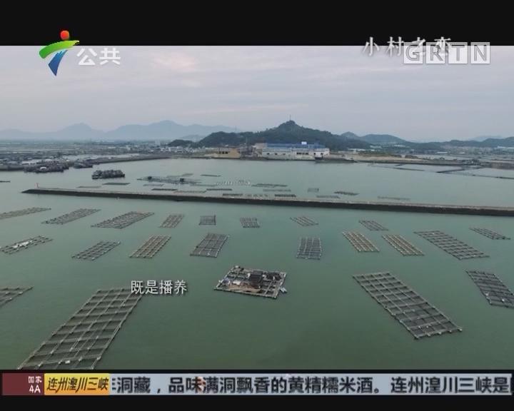 《小村之恋》潮州·饶平——汫洲