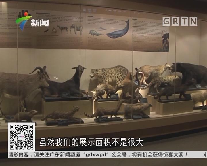 动物博物馆:广州86中有全省唯一的动物博物馆