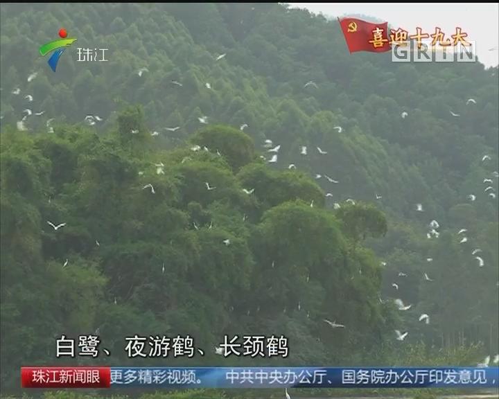 整治环境 空气改善 引来万鸟归巢