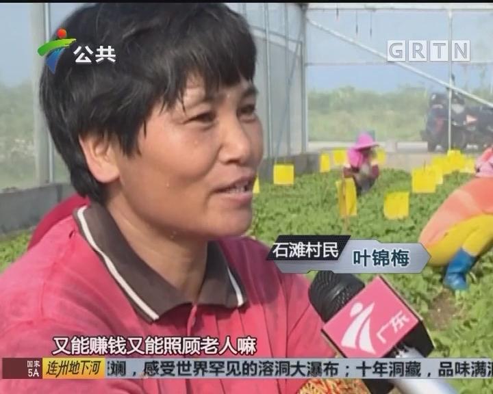 致富有道在广东:就业脱贫助石滩成片区最富村