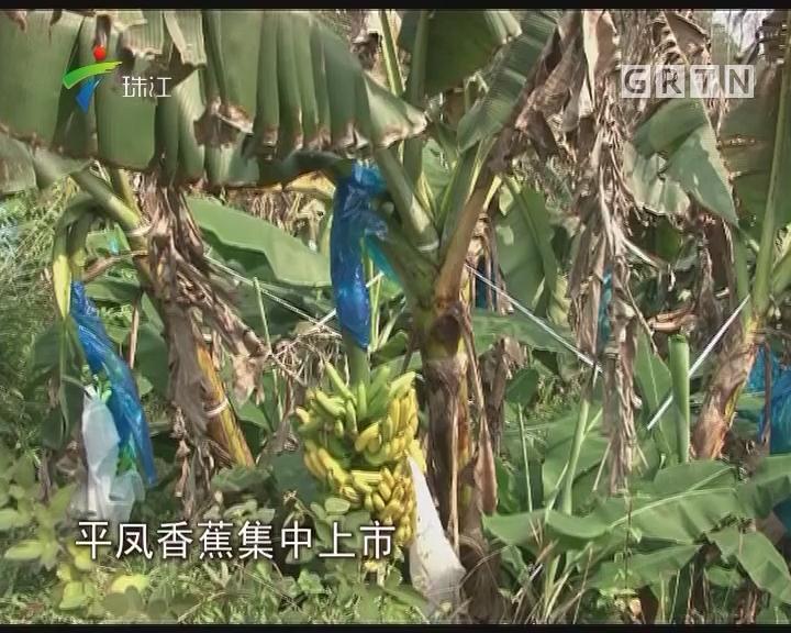 封开:电商团购新模式 助蕉农增产又增收