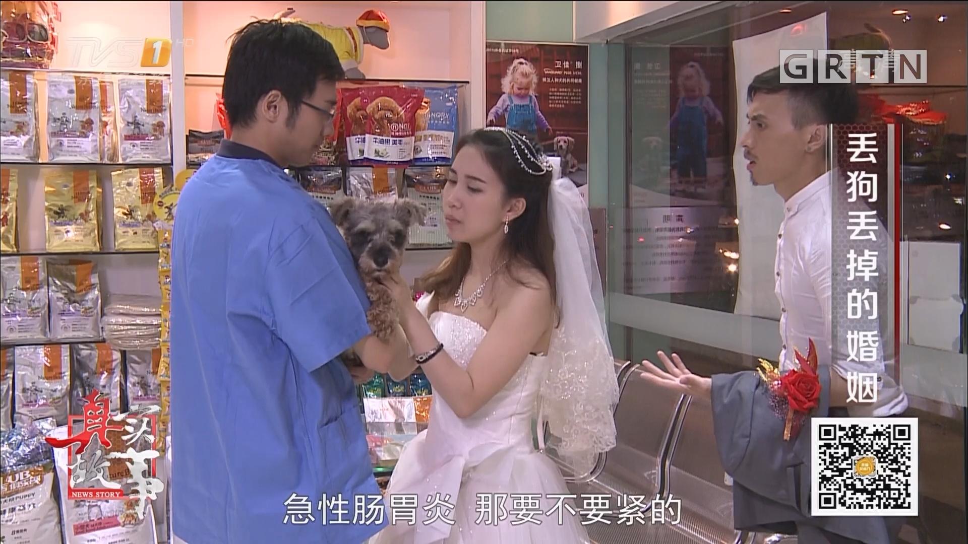 [HD][2017-10-10]真实故事:丢狗丢掉的婚姻