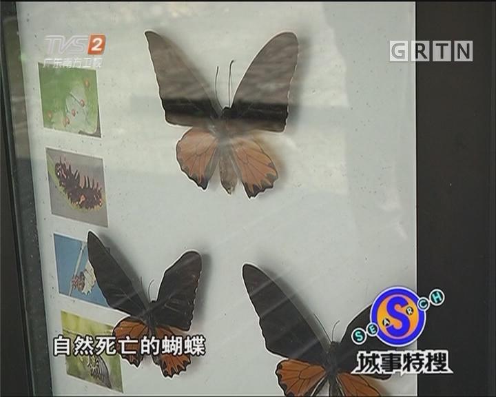 轻舞飞扬的美丽蝴蝶谷