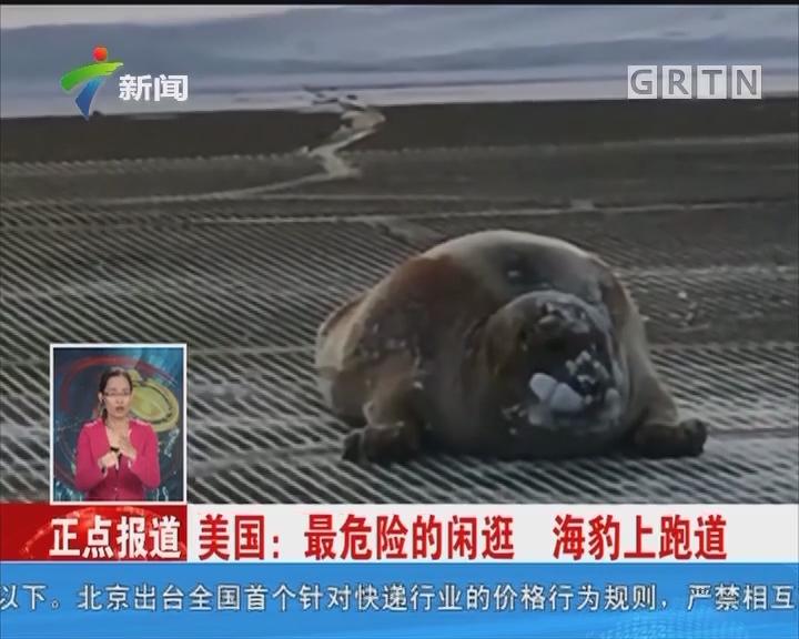 美国:最危险的闲逛 海豹上跑道