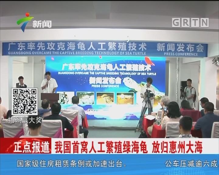 我国首窝人工繁殖绿海龟 放归惠州大海