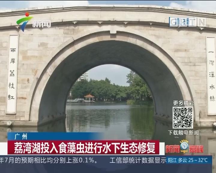 广州:荔湾湖投入食藻虫进行水下生态修复