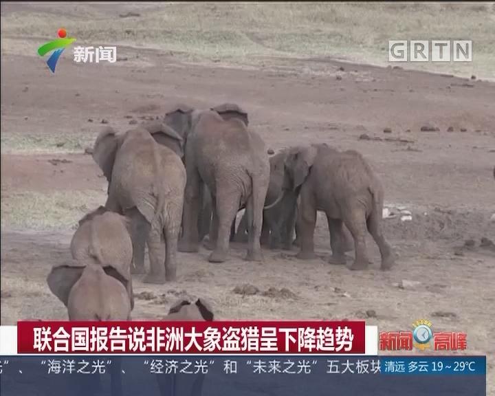 联合国报告说非洲大象盗猎呈下降趋势