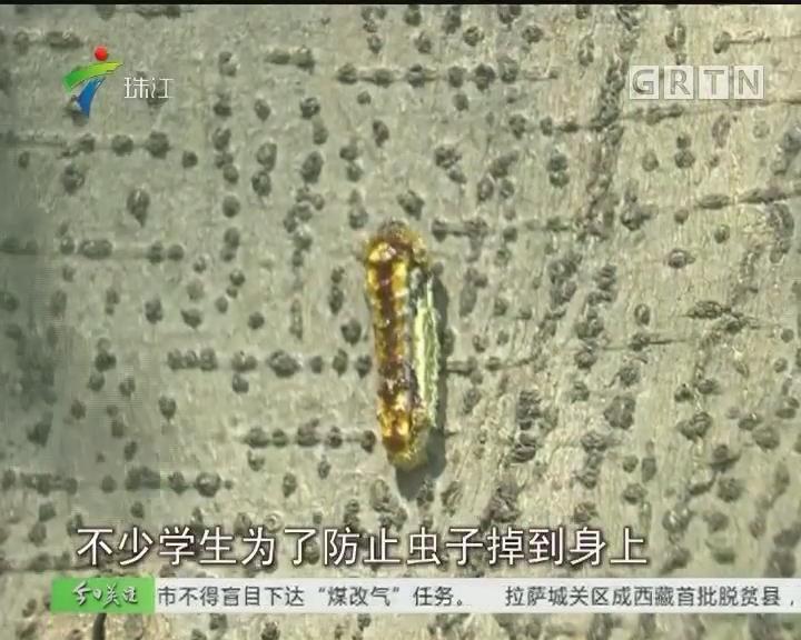 """南海:校园榕树下""""虫雨""""?学生撑伞避虫"""