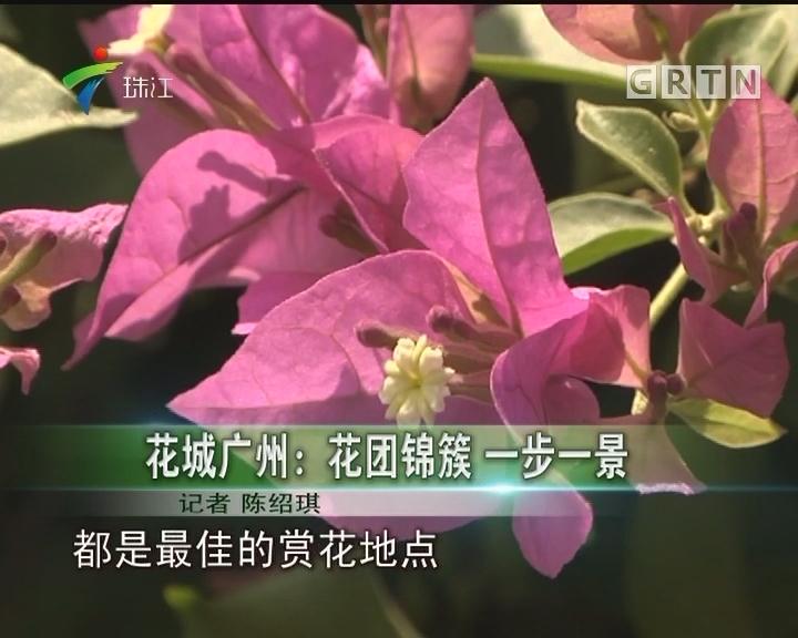 花城广州:花团锦簇 一步一景